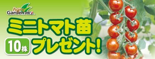 ミニトマト苗 10株プレゼント!