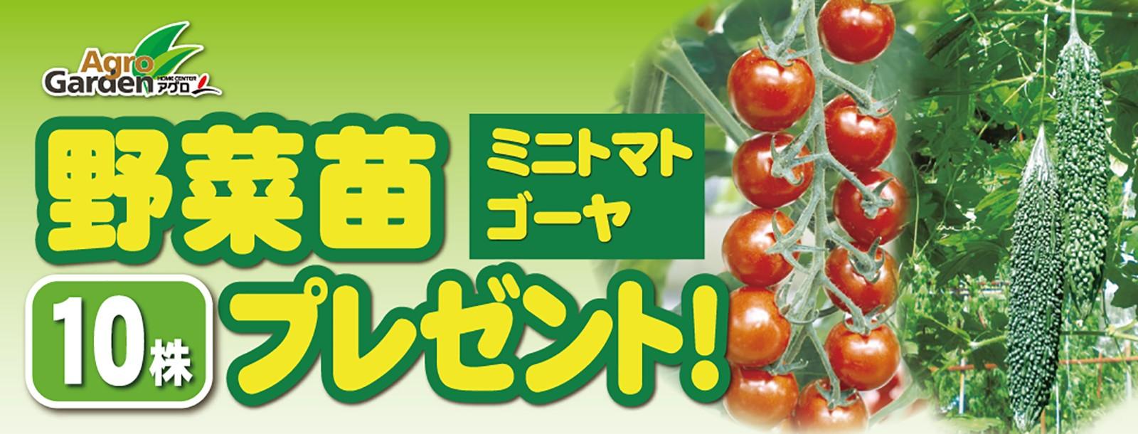 野菜苗10株プレゼント!