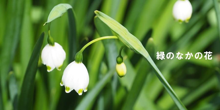 緑の中の花