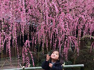 大きな梅の木と小さな孫