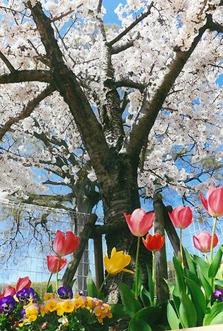神戸市西区 ひまわりこども園 様