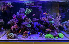 「魚の集まる色彩豊かなサンゴ礁」