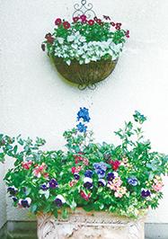 「花がら摘み、がんばってます!」