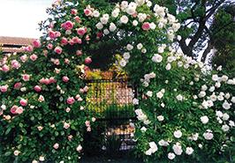 「バラのアーチと手作りガーデン」