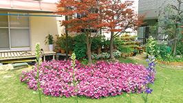 「芝生に花のカーペット」